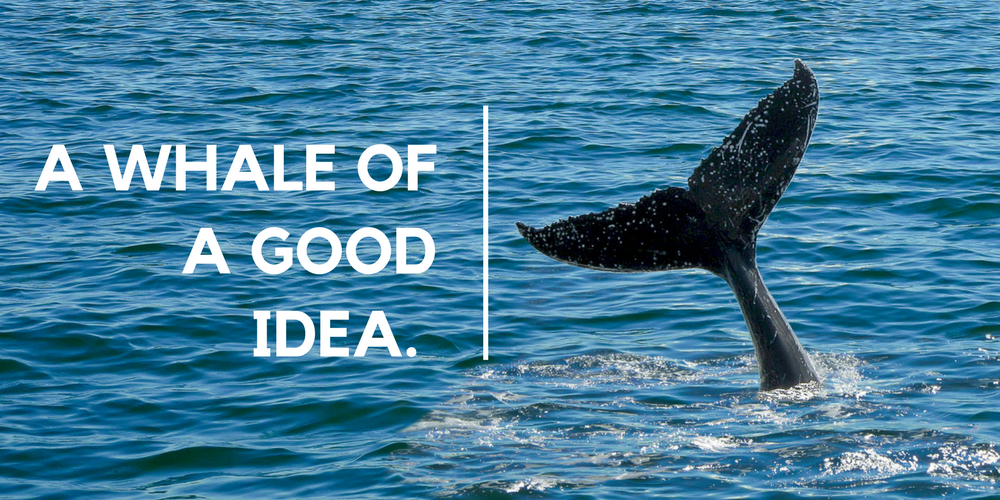A Whale of a Good Idea
