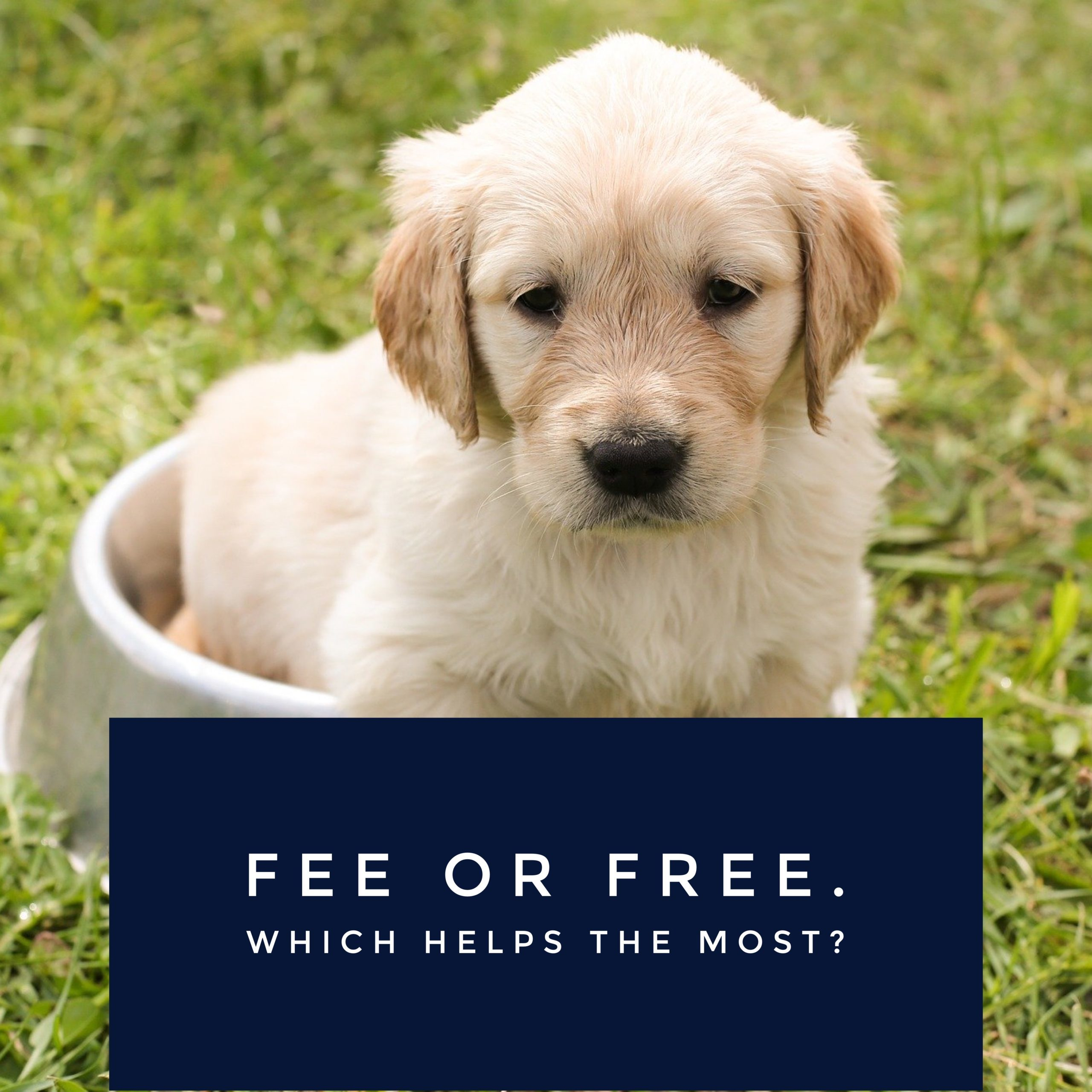 Fee or Free? Which Helps The Most?